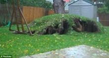 ระทึก ฤทธิ์พายุแซนดี้โค่นต้นไม้ใหญ่หลุดจากราก