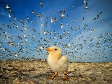 ภาพถ่ายวิวสุดอลังการ National Geographic November 2012