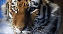 เสือขย้ำครูฝึกตายในเม็กซิโก