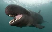 รอยยิ้มวาฬเพชฌฆาต