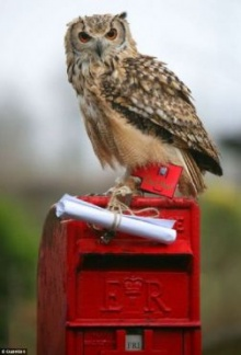 ฝึก ′นกฮูก′ ให้ส่งจดหมาย