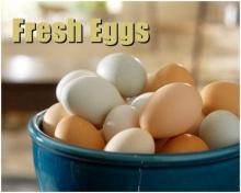 ซื้อไข่ไก่ ไข่เป็ดมาแล้ว จะล้างหรือไม่ล้างดี?