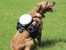 สุนัขบังคับวิทยุ