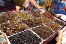 เลือกกินแมลงอย่างไรจึงปลอดภัย