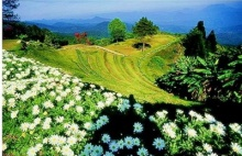 ความรัก กับ ต้นหญ้า…