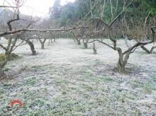 หนาวจัดอุณหภูมิติดลบ น้ำค้างแข็งคลุมยอดหญ้าสีขาวโพลน ที่′อ่างขาง′ เชียงใหม่