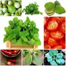 8 ผักสวนครัวมากประโยชน์