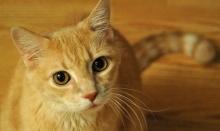 ว่ากันว่าแมวอาศัยอยุ่กับคนมา 5,300ปีมาแล้ว