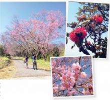 7 เส้นทางขับรถเที่ยว เชียงใหม่ ชมสายหมอก ดอกไม้งาม