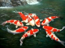 ปลา สัตว์มงคล เสริมความมั่งคั่ง รำรวย