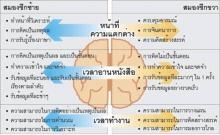 สมองซีกซ้าย และขวา