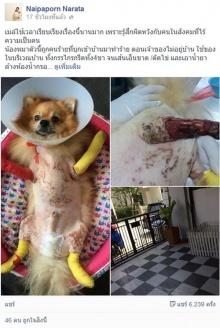 แชร์ว่อน! น้องหมาถูกคนทำร้ายจนต้องตัดขาทั้งสี่