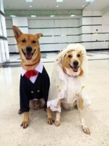 ฮือฮา! แจกการ์ดงานวิวาห์ น้องหมา พบรักจากการร่วมบริจาคเลือด