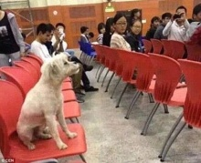 สลด! เจ้าหน้าที่มหาฯลัย ฆ่าหมาจรจัดที่แอบเข้ามาเรียนกับนักศึกษา!