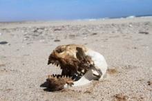 เคยเห็นยังชายหาดที่เต็มไปด้วย....  !!!หลอนสุด