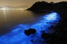 """จะสวยแค่ไหนเมื่อแพลงตอนนับล้าน """"เปล่งแสง"""" บนชายหาดฮ่องกง?"""