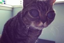 แห่ชมแมวตาโต๊โต มาทิลด้าเซเลบหน้าใหม่แห่งโลกไอจี