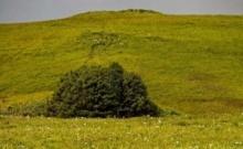 """เรื่องน่าเศร้าของ """"อุทยานแห่งชาติเอแดค"""" เขตป่าสงวนที่เล็กที่สุดในโลก"""