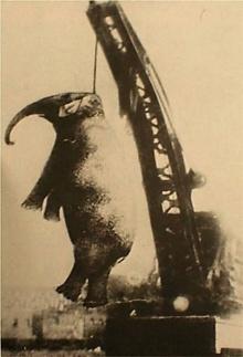 แปลกแต่จริง!! ประหารชีวิต....ช้าง...เพื่อ??