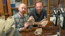 จระเข้ยักษ์ยุคก่อนประวัติศาสตร์มีฟันคล้ายที-เร็กซ์