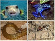 9 สุดยอดสัตว์มีพิษที่อันตรายที่สุดในโลก!!