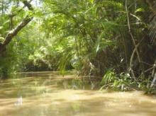 ♣ Amazon : ความเร้นลับแห่งป่าดงดิบ ♣