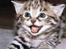 ผู้หญิงเลี้ยงแมวเสี่ยงฆ่าตัวตาย?