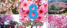 8 จุดยอดนิยมชมซากุระเมืองไทย