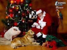 ซันตาครอสบิดาแห่งวันคริสต์มาส