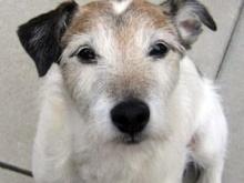 ผ่าตัดช่วยสุนัขกลืนเหรียญเพนนีกว่า 100 เหรียญลงท้อง