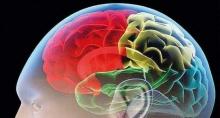 สหรัฐเผยโครงการศึกษาสมองคนเพื่อรักษาอัลไซเมอร์