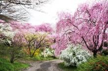 ฮาราทานิ-เอน สวนดอกไม้ในนิทานแห่งเกียวโต