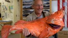 ทำลายสถิติปลาอายุยืน พบชอร์แทรเกอร์ ร็อคฟิช อายุ 200 ปี