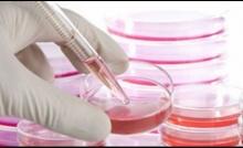 แพทย์เตือน! การใช้สเต็มเซลล์รักษาโรค ยังทำได้เพียง 5 โรคทางระบบโลหิต