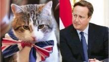 นายกอังกฤษโต้ไม่รักแมวทำเนียบ