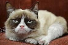 แมวกวักหน้าบูดค่าตัว32ล้าน
