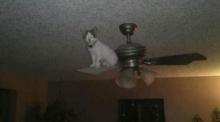 เมื่อแมวเหมียวหาอะไรทำแก้เซ็ง