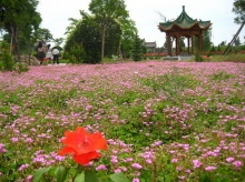 The Garden of Morning Calm ดินแดนแห่งความสงบยามเช้า