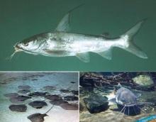 ปลาอันตรายในทะเลไทย