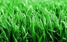 เรื่องความรักกับต้นหญ้า