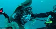 ระทึก ช่างภาพใต้น้ำฟัดกับปลาหมึกยักษ์ใต้ทะเลหลังแย่งกล้อง