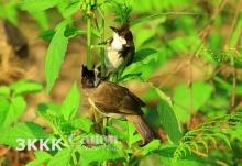 เที่ยวป่า ส่องสัตว์ธรรมชาติ กับ 7 อุทยานเมืองไทย