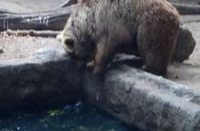 น้ำตาจิไหล!! มุมน่ารักของคุณหมี ช่วยชีวิตสัตว์ร่วมโลก