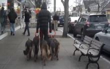 สุดเจ๋ง!!! พาสุนัขเดินเล่นเเบบใหม่ ไร้สายจูง(คลิป)