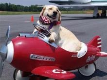 เดินทางพร้อมสัตว์เลี้ยง โดยทางเครื่องบิน ยังไงให้ปลอดภัย?