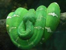 10 สายพันธุ์งูที่น่าทึ่ง!!!