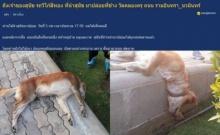 สงสารจับใจ หมาถูกทิ้ง ตายอนาถข้างถนน!