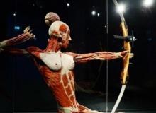 อึ้งมาก!! พิพิธภัณฑ์ศพพลาสติเนชันในเยอรมัน