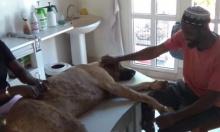 อึ้ง!! น้องหมามีจุดตะปุ่มตะป่ำขึ้นเต็มตัว เพราะ?!