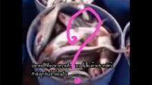 อ.เจษฎา ชี้จริงหรือเท็จ!!  ปลา(สวาย)ดอลลี่เนื้อขาว เพราะแช่ผงซักฟอก